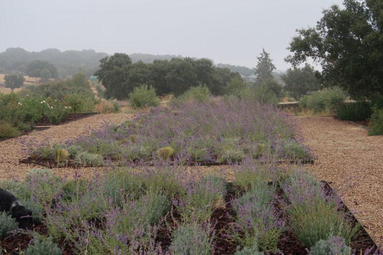 jardines-de-campo-Madroñeras2
