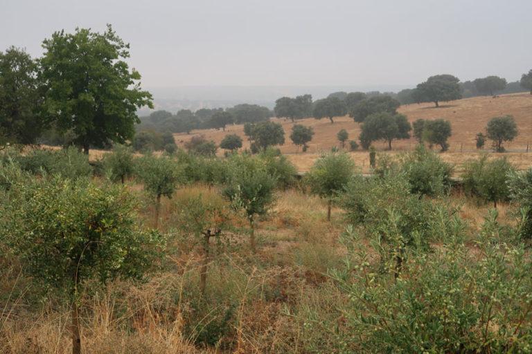 jardines-de-campo-Madroñeras20