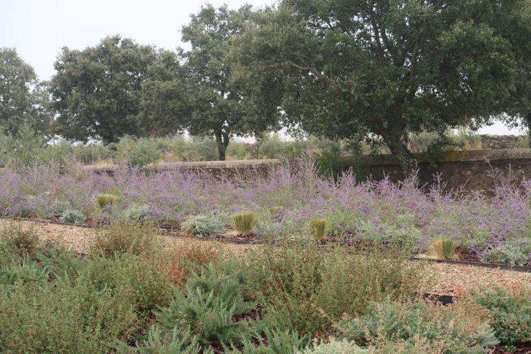 jardines-de-campo-Madroñeras25
