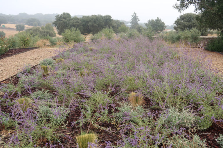 jardines-de-campo-Madroñeras28