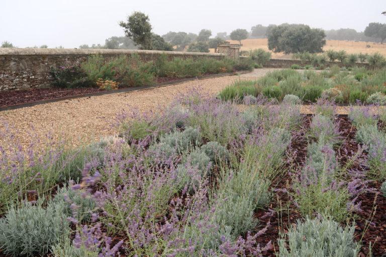 jardines-de-campo-Madroñeras29