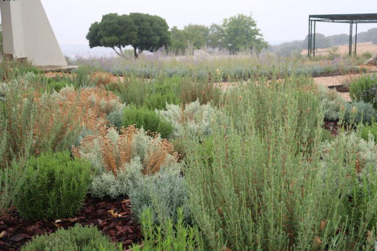 jardines-de-campo-Madroñeras33