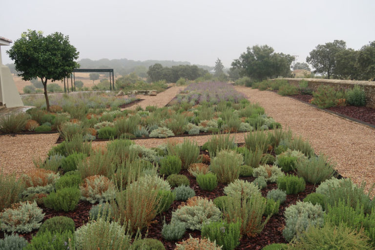 jardines-de-campo-Madroñeras34