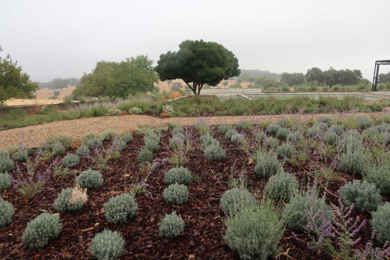 jardines-de-campo-Madroñeras36