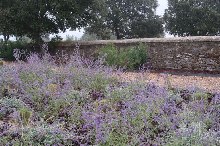 jardines-de-campo-Madroñeras4