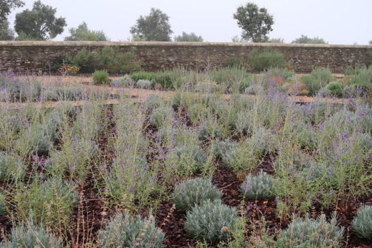 jardines-de-campo-Madroñeras7