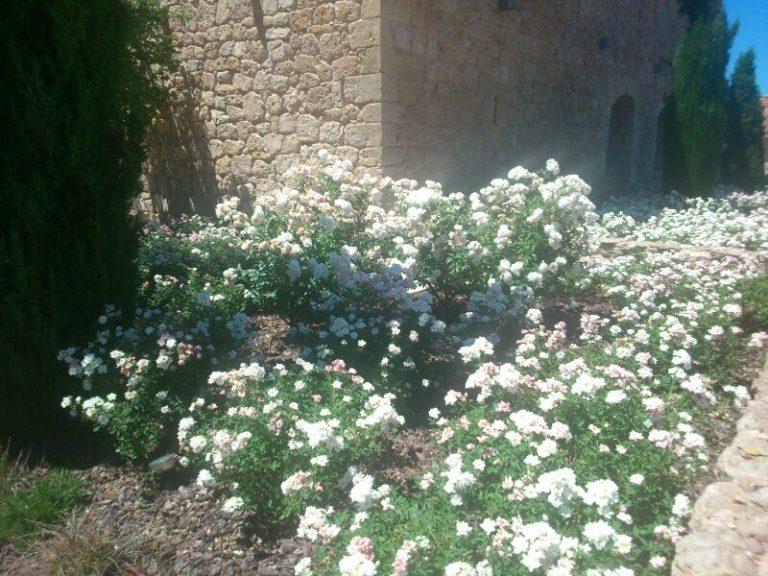jardines-de-campo-Molina-Aragon5