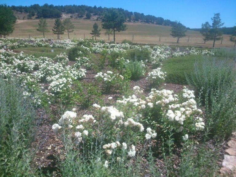 jardines-de-campo-Molina-Aragon7