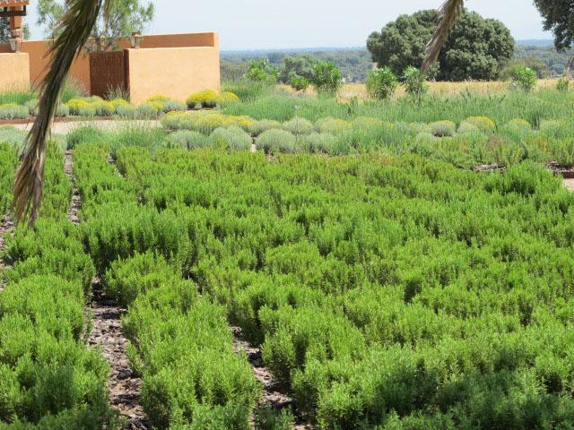 jardines-de-campo-Puente Arzobispo-10