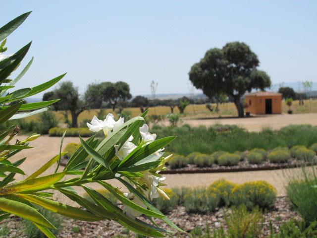 jardines-de-campo-Puente Arzobispo-23