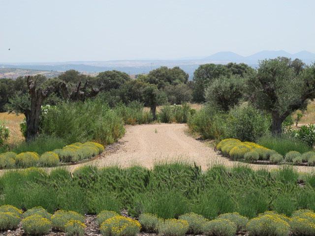 jardines-de-campo-Puente Arzobispo-29