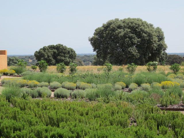 jardines-de-campo-Puente Arzobispo-7