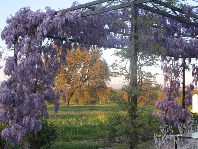 jardines-de-campo-Talavera-12
