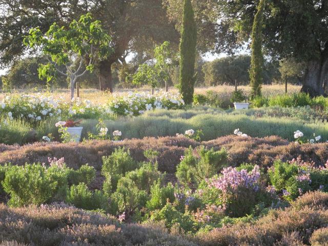 jardines-de-campo-Talavera-16
