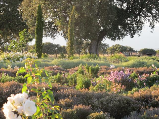 jardines-de-campo-Talavera-17