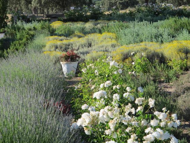 jardines-de-campo-Talavera-7