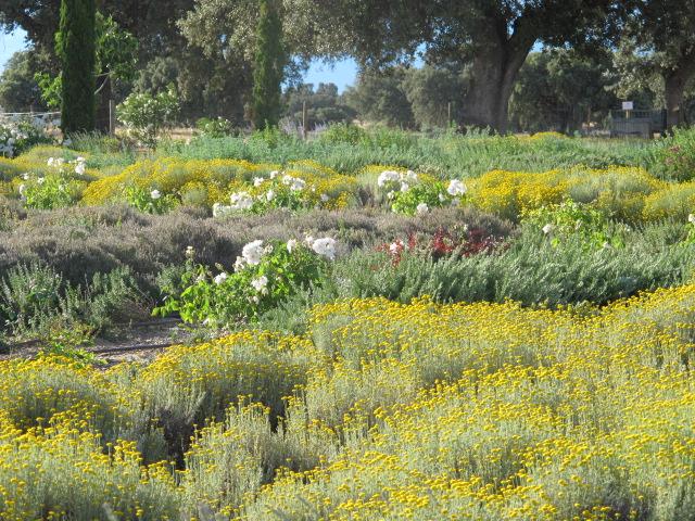 jardines-de-campo-Talavera-9