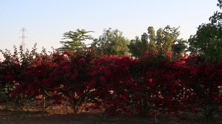 jardines-de-campo-carmona-12