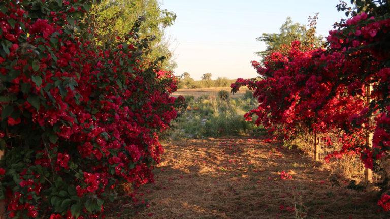 jardines-de-campo-carmona-21