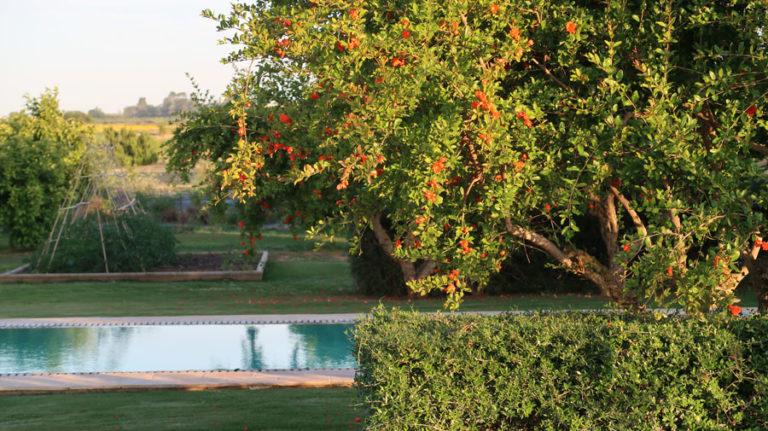 jardines-de-campo-carmona-8