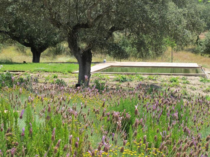 jardines-de-campo-coria-8