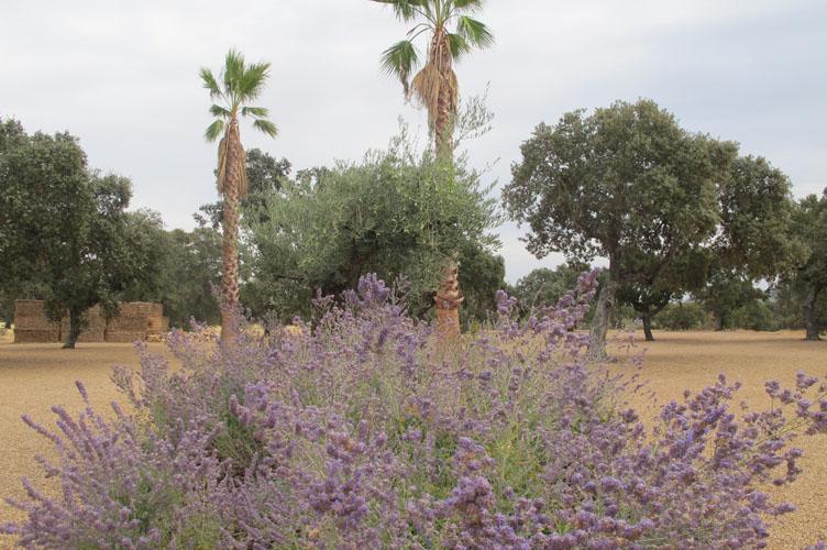 jardines-de-campo-merida-19