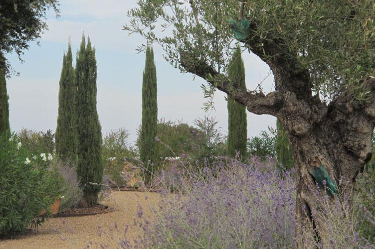 jardines-de-campo-merida-23