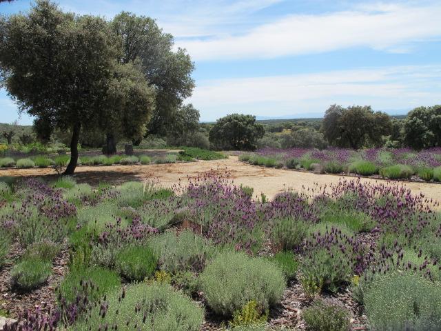 jardines-de-campo-navalcan11