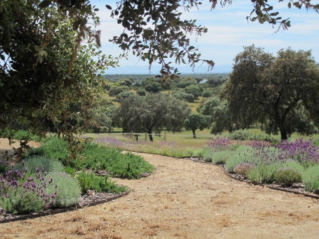 jardines-de-campo-navalcan14