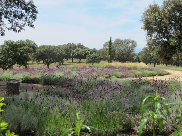 jardines-de-campo-navalcan16