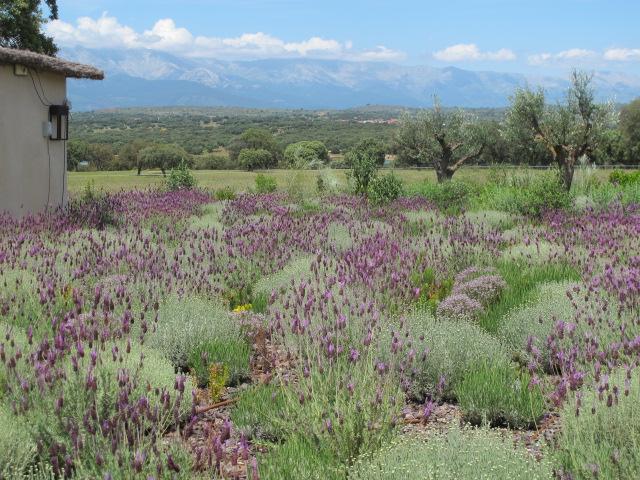 jardines-de-campo-navalcan18