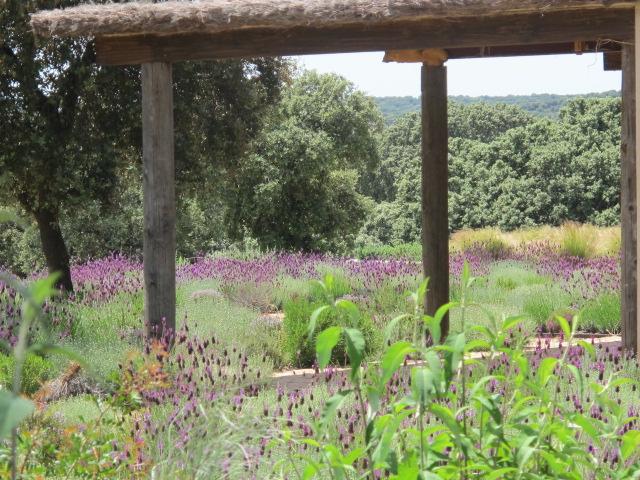 jardines-de-campo-navalcan19