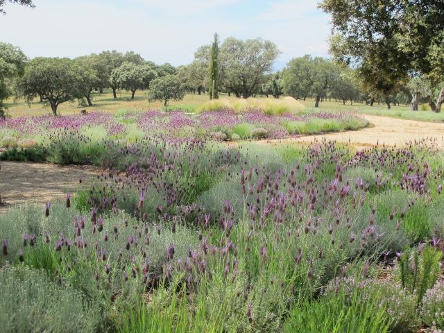 jardines-de-campo-navalcan6