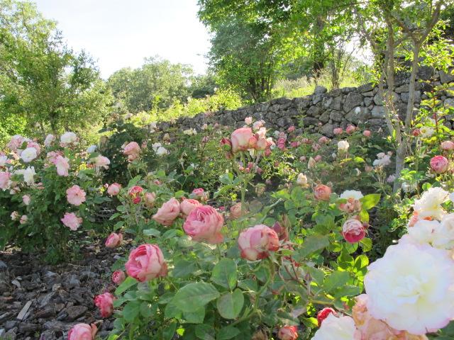 jardines-de-campo-tietar11