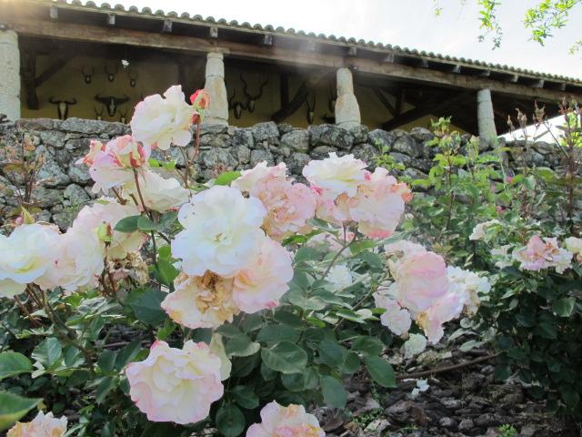 jardines-de-campo-tietar12
