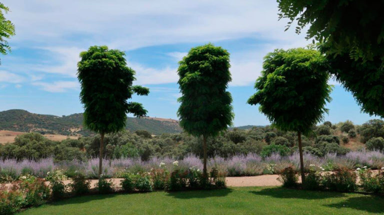 jardinesdecampo-fase1-Alcaudete de la Jara7