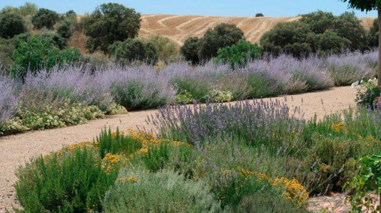 jardinesdecampo-fase1-Alcaudete de la Jara8