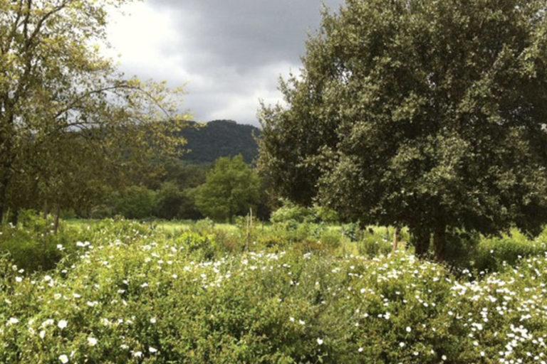 jardinesdecampo-fase1-cadiz14