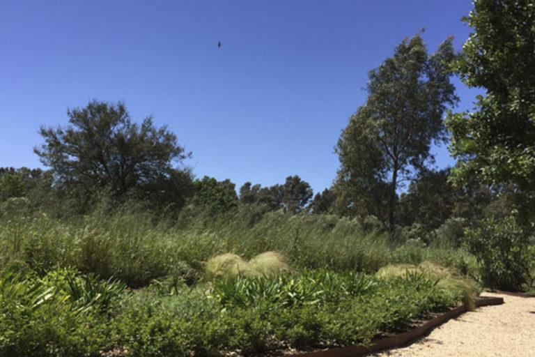 jardinesdecampo-fase1-cadiz2