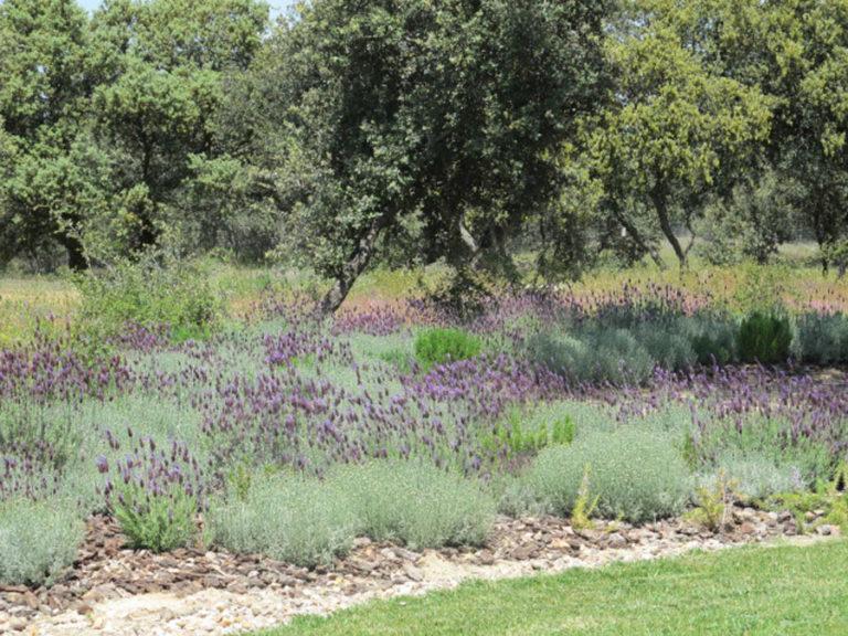 jardinesdecampo-fase1-oropesa11