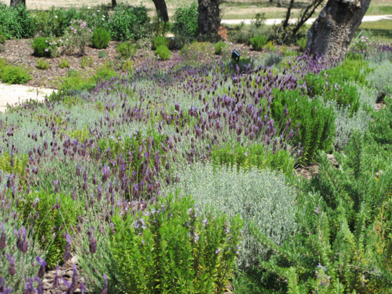 jardinesdecampo-fase1-oropesa15
