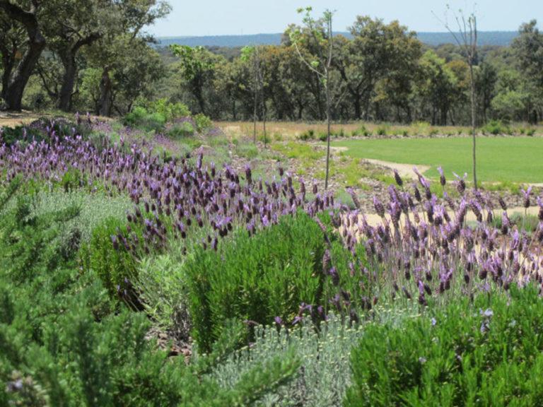 jardinesdecampo-fase1-oropesa16