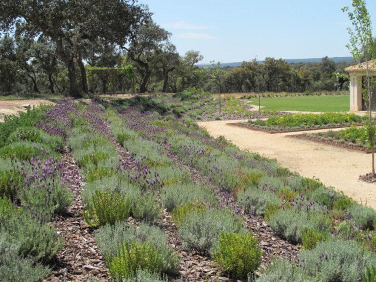 jardinesdecampo-fase1-oropesa17