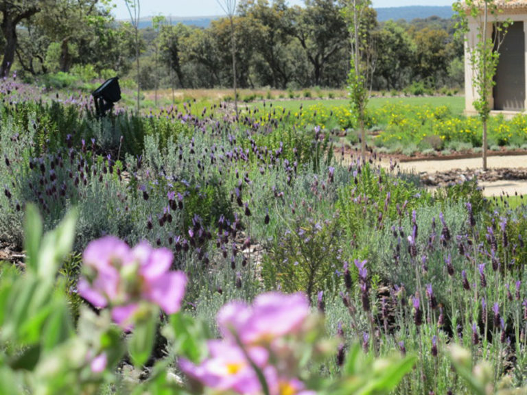 jardinesdecampo-fase1-oropesa18