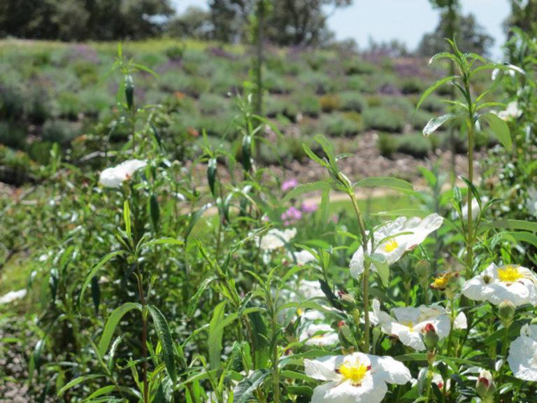 jardinesdecampo-fase1-oropesa19