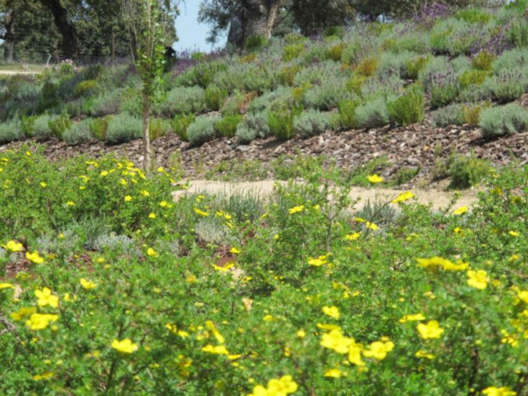 jardinesdecampo-fase1-oropesa22