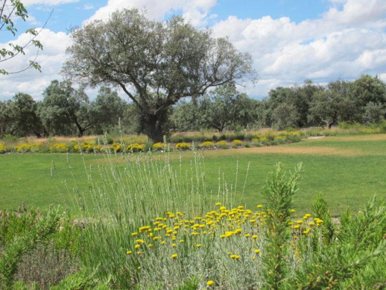 jardinesdecampo-fase1-oropesa24