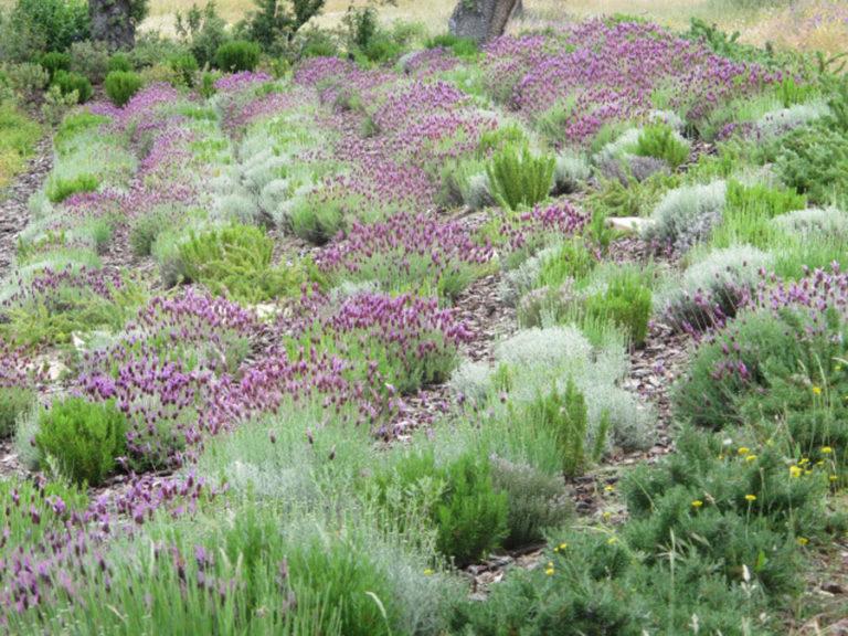 jardinesdecampo-fase1-oropesa25
