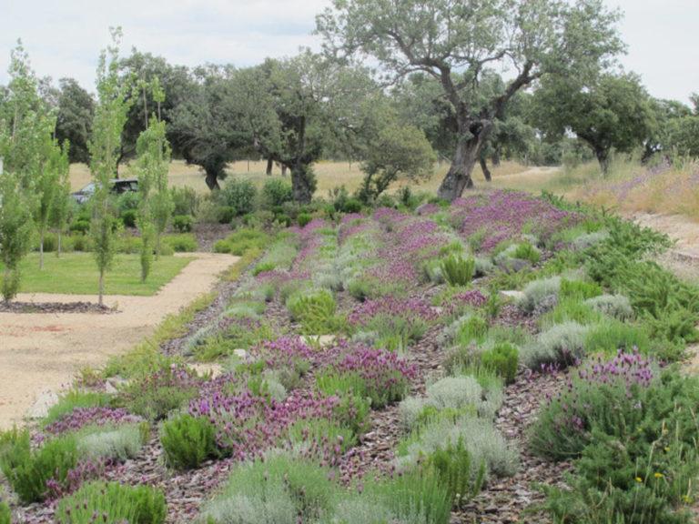 jardinesdecampo-fase1-oropesa26