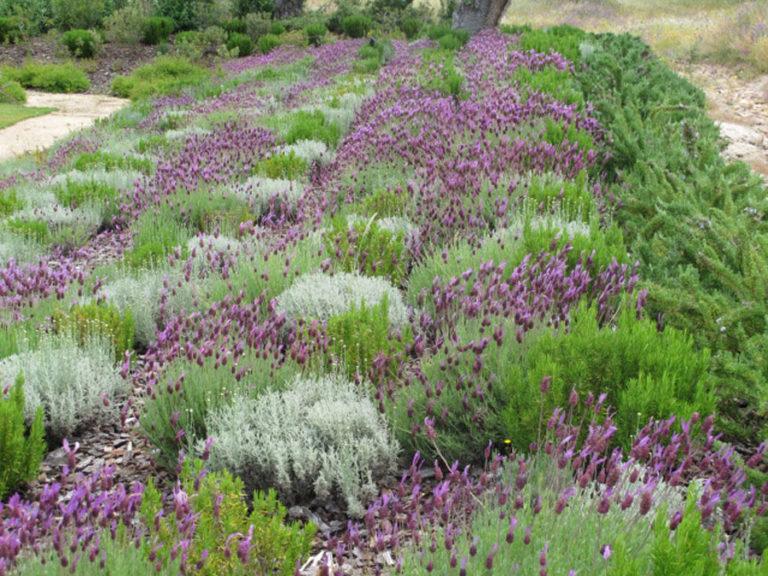 jardinesdecampo-fase1-oropesa27